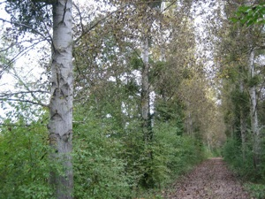 Chemin rural des esquillons